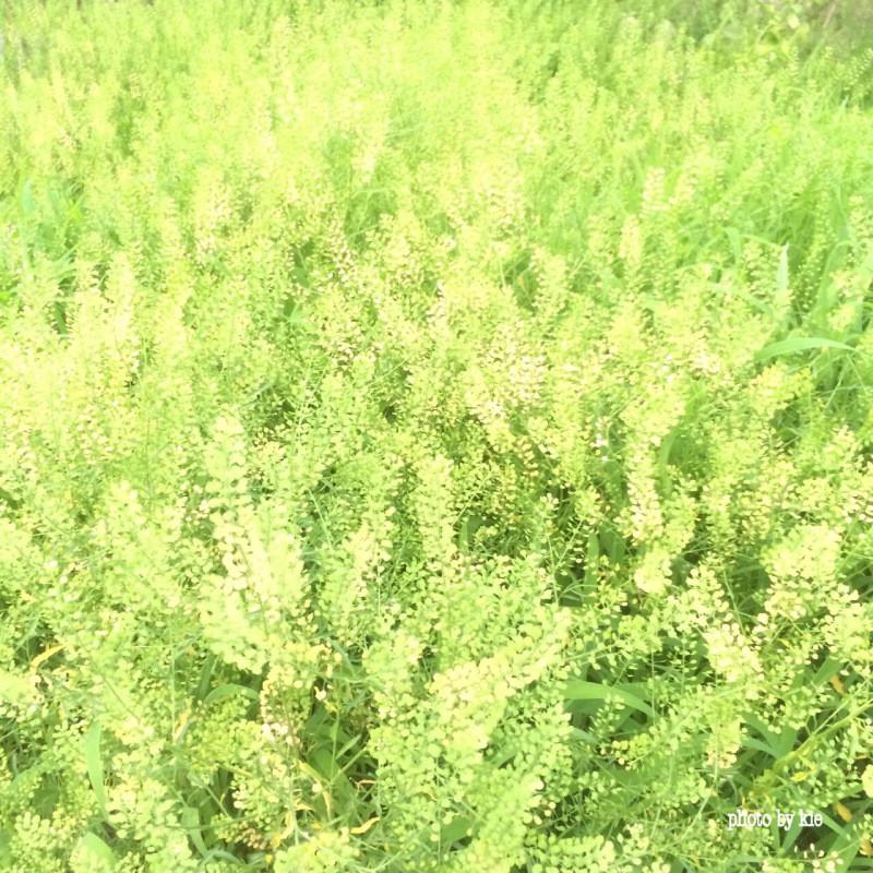 公園の草たち