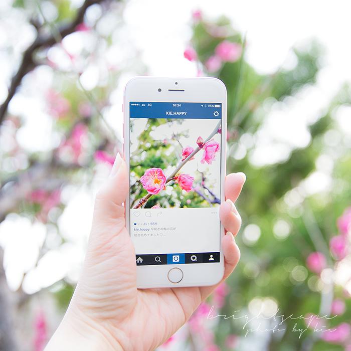 梅の花をiPhoneで撮ろう